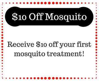 mosquito treatment