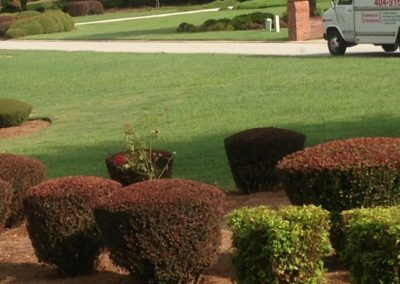 Pruning by Sam's Landscaping