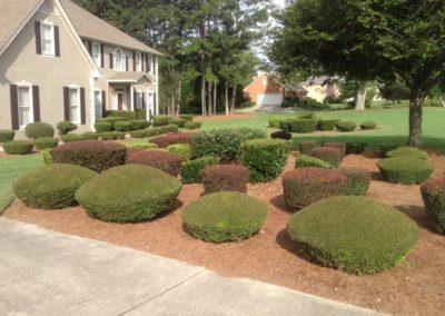 shrub pruning company