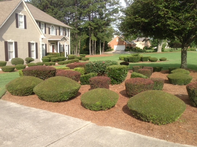 affordable landscaping near me