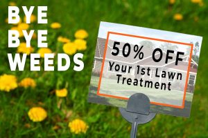 50 percent off first lawn treatment