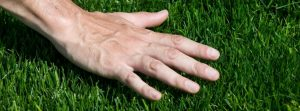 Lawn Tips For Georgia Lawns