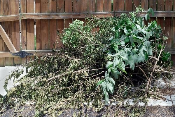 Yard Cleaning Service Near Me
